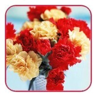 Flower delivery Gomel. Carnations