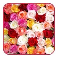 Flower delivery Gomel. Roses