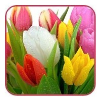 Flower delivery Gomel. Tulips